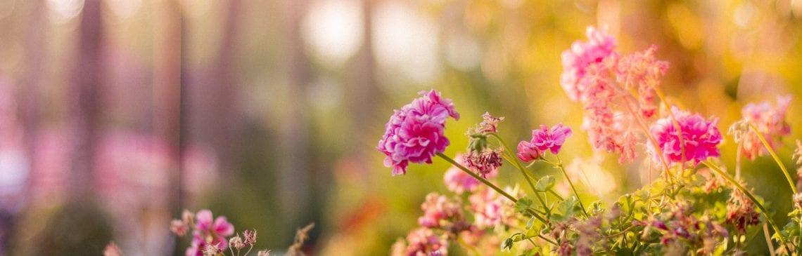 Pexels flowers